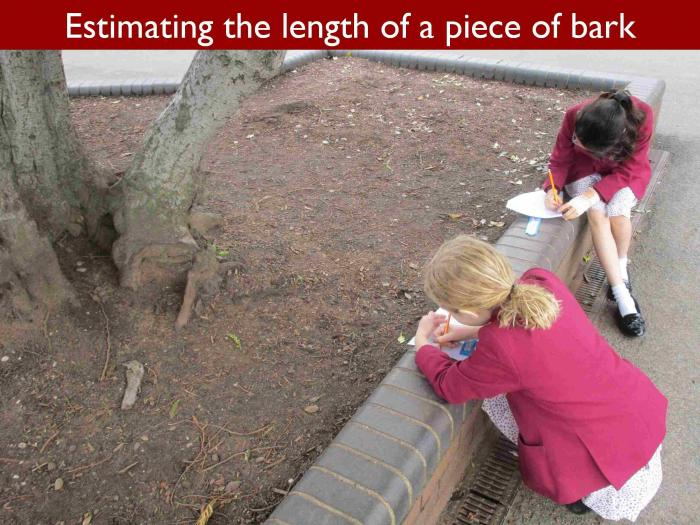 12 Estimating the length of a piece of bark