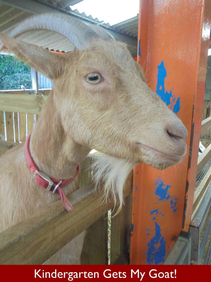 Eversfield Kindergarten Gets My Goat!
