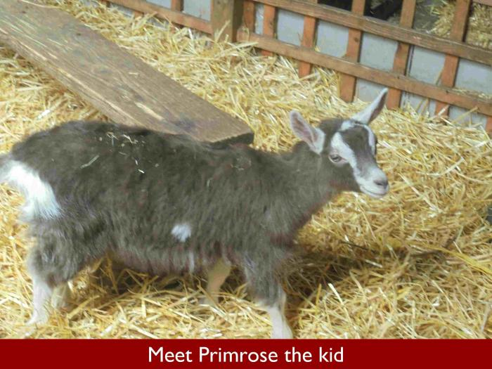 20 Meet Primrose the kid