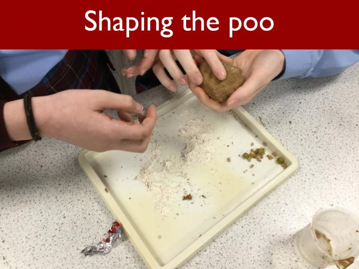 4 Shaping the poo
