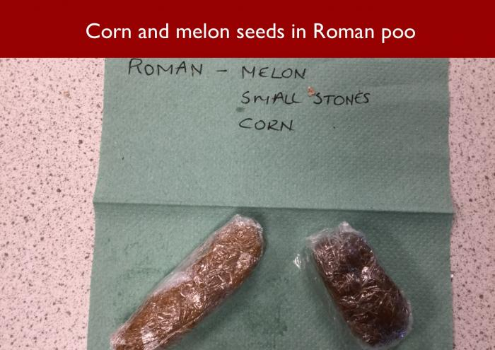 9 Corn and melon seeds in Roman poo
