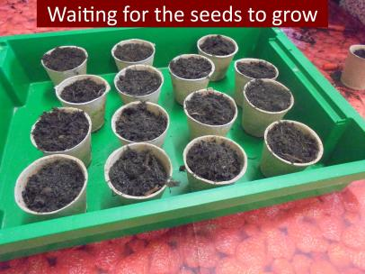 12 Waiting for the seeds to grow