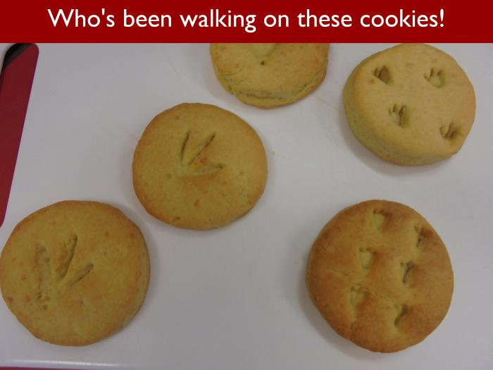 Blog RAH Dinosaurs 28 Whos been walking on these cookies